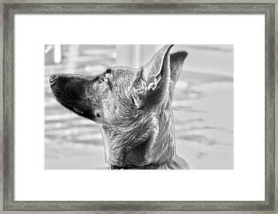 Jethro Framed Print
