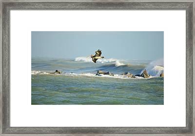 Jetty Pelican Framed Print by Lynda Dawson-Youngclaus
