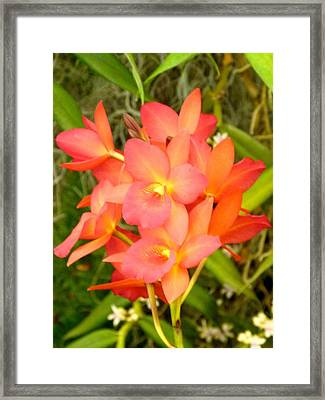 Jewel Box Orchids Framed Print by Richard Bryce and Family