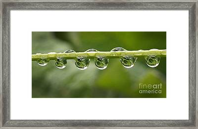 Framed Print featuring the photograph Jewel Drops by Inge Riis McDonald