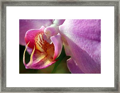 Jewel Framed Print