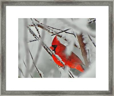 Framed Print featuring the photograph Jewel In The Storm  by John Harding