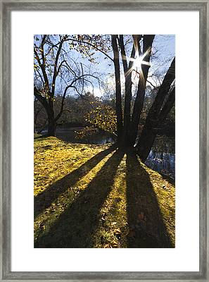 Jewel In The Trees Framed Print by Debra and Dave Vanderlaan