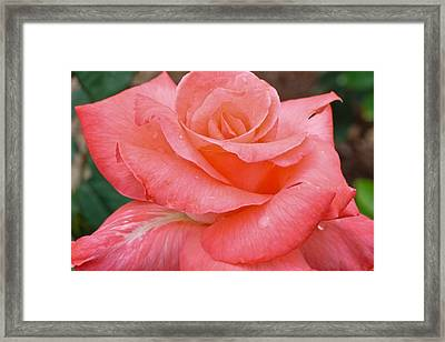 Jewel Framed Print by Julie Andel