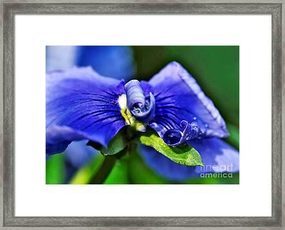 Jewel On A Pansy Framed Print by Kaye Menner