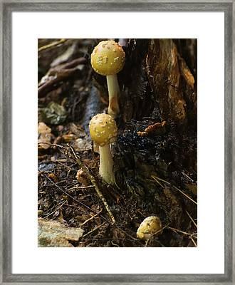 Jeweled Dethcap Mushroom Framed Print by Chris Flees
