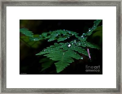 Jeweled Fern Framed Print by Chris Heitstuman