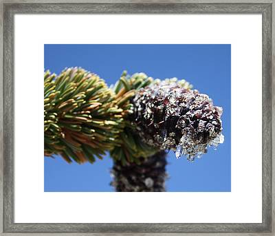 Jeweled Pinecone Framed Print