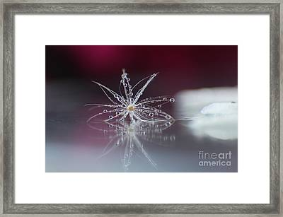 Jewels Framed Print by Eden Baed