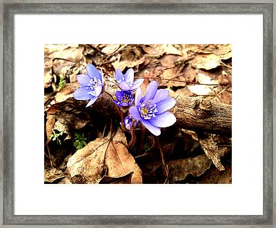 Jewels Framed Print by Lucy D