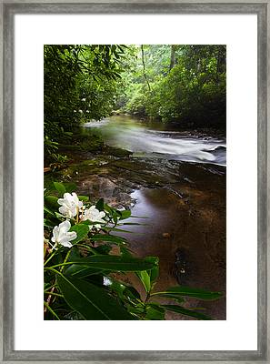 Jewels Of The Davidson River 2 Framed Print by Rob Travis