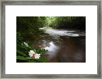 Jewels Of The Davidson River Framed Print by Rob Travis