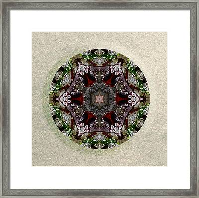 Jewels Of The Sea  Framed Print