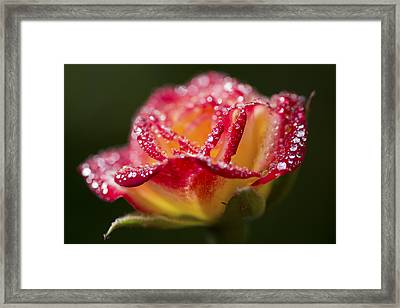 Framed Print featuring the photograph Jewels by Priya Ghose