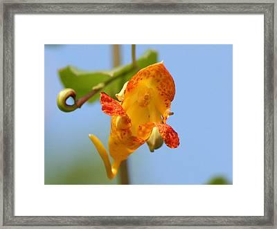 Jewelweed Open Door  Framed Print by Neal Eslinger