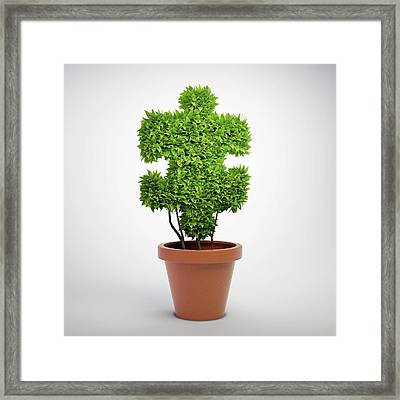 Jigsaw Plant Framed Print by Andrzej Wojcicki/science Photo Library