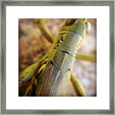 Macro Grasshopper Framed Print