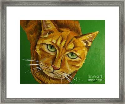 Jing Jing - Cat Framed Print