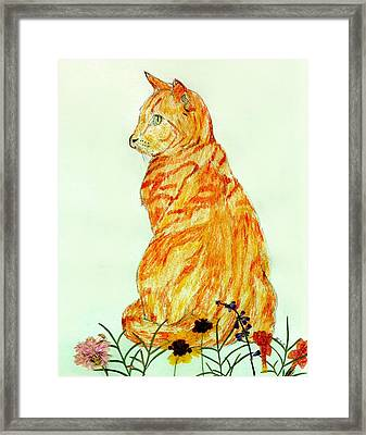 Framed Print featuring the drawing Jinj by Stephanie Grant