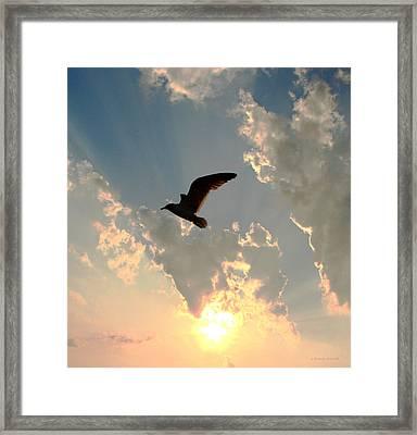 Jl Seagull Framed Print