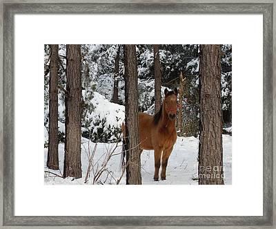 Jo Jo In The Snow Framed Print