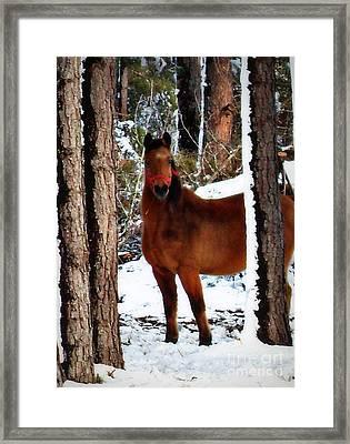 Jo Jo Framed Print by Vivian Cook