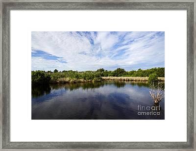 Joe Fox Fine Art - Flooded Grasslands And Mangrove Forest In The Framed Print