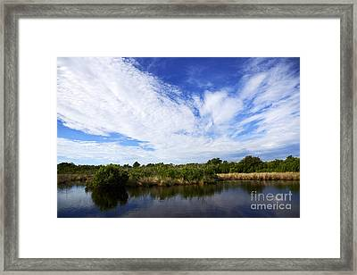 Joe Fox Fine Art - Flooded Grasslands With Mangrove Forest In The Background In The Florida Everglades Us Framed Print