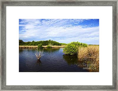 Joe Fox Fine Art - Flooded Grasslands With Mangrove Forest In The Background In The Florida Everglades Usa Framed Print