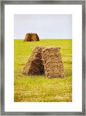 Joe Fox Fine Art - Hay Bales Drying In A Field At Harvest Time Framed Print by Joe Fox