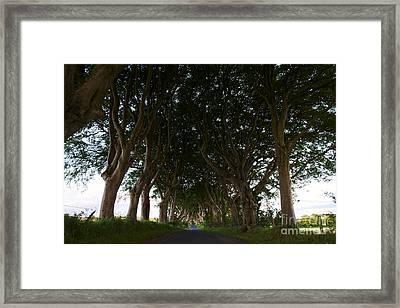 Joe Fox Fine Art - The Dark Hedges Balllymoney Ireland Site Of The Kings Road In Game Of Thrones Framed Print by Joe Fox