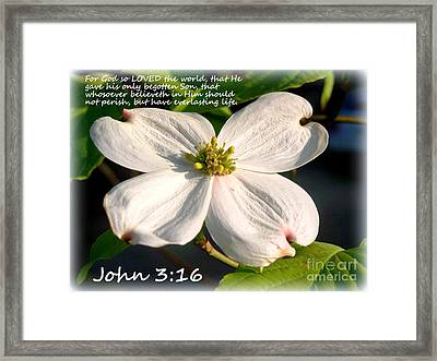 John 3-16/dogwood Legend Framed Print by Kathy  White
