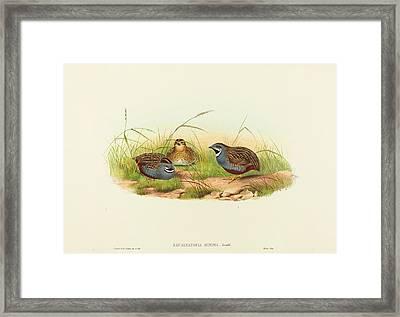 John Gould And H.c. Richter British Framed Print
