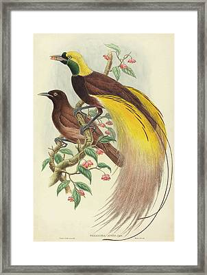 John Gould And W Framed Print by Quint Lox