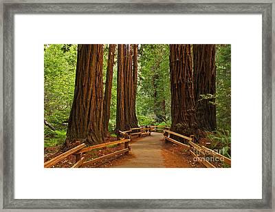 John Muir Redwoods Nineteen Framed Print by Donald Sewell