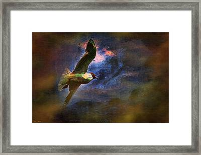 Johnathon Livingston Seagull Framed Print