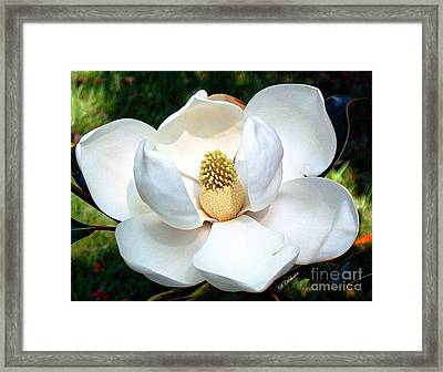 Framed Print featuring the photograph John's Magnolia by Barbara Chichester