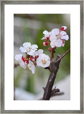 Joille Framed Print by Rami Khoury