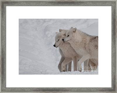 Framed Print featuring the photograph Joined At The Hip by Bianca Nadeau