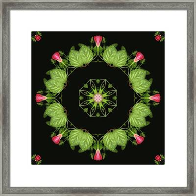 Joining The Dance Framed Print by Wendy J St Christopher