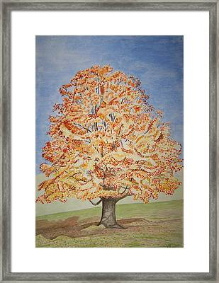 Jolanda's Maple Tree Framed Print