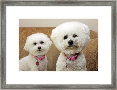 Jolie And Chloe Wait For A Cookie Framed Print by Michael Ledray