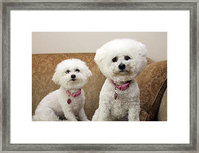 Jolie And Chloe Want A Cookie Framed Print by Michael Ledray