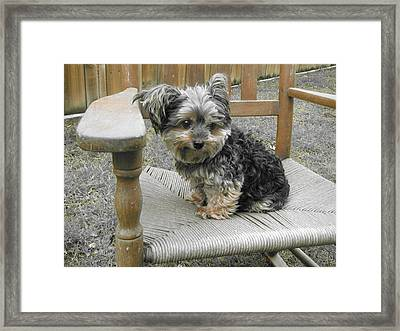 Jolie II Framed Print by Beth Vincent