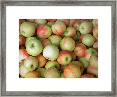 Jonagold Apples Framed Print