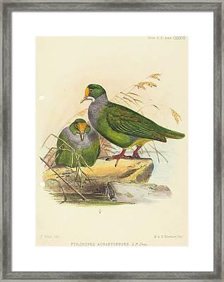 Joseph Wolf British, 1820 - 1899, Two Birds Ptilonopus Framed Print