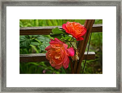 Joseph's Coat On The Fence Framed Print by Ronda Broatch
