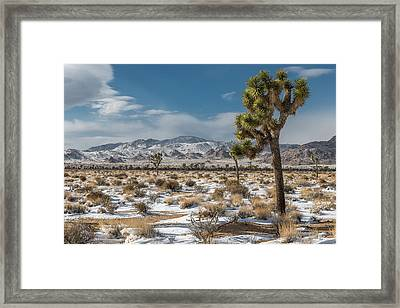 Josgua Tree In Snow Framed Print by Peter Tellone