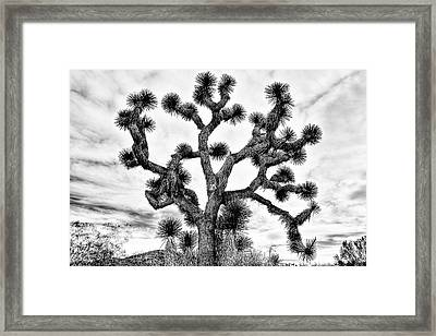 Framed Print featuring the photograph Joshua Black And White by Benjamin Yeager