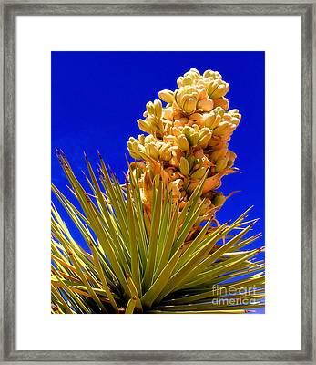 Joshua Bloom By Diana Sainz Framed Print